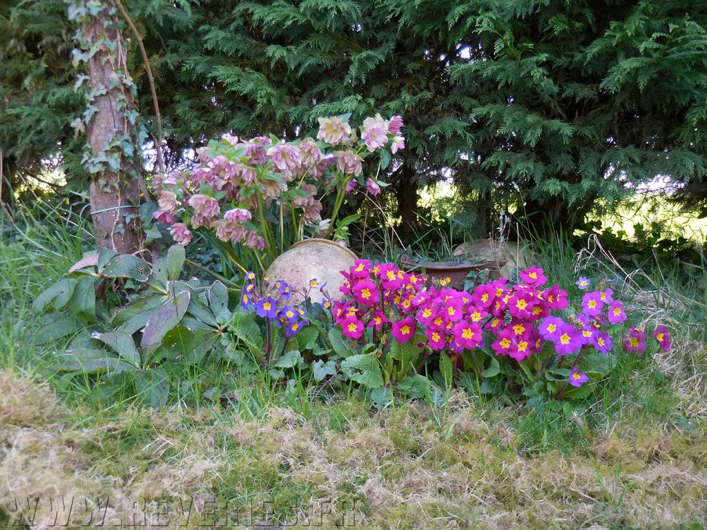05 xellebores jardin for Jardin 05