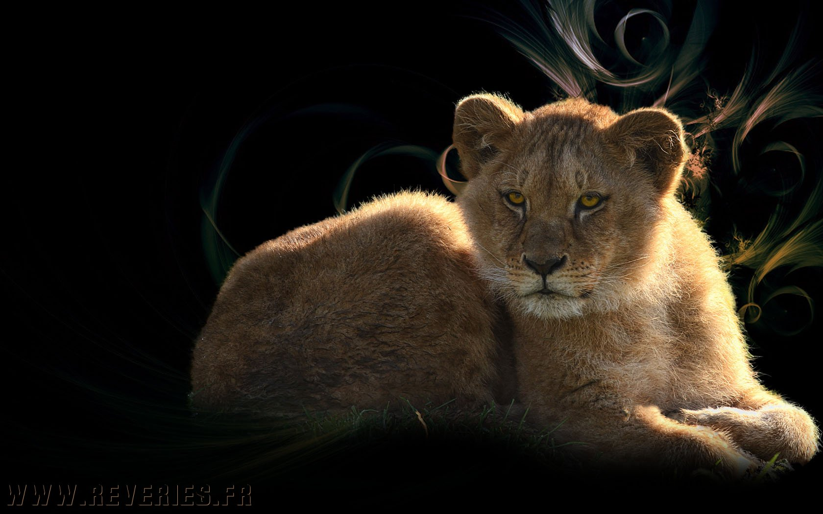 Animaux wallpapers - Wallpaper animaux ...